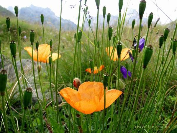 Фото, которые нам нравятся Flowers1