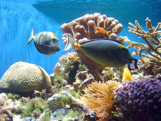 Подводный мир красного моря в конце
