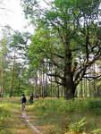 Экскурсия по Полесскому заповеднику. Велопоход выходного дня, Украина